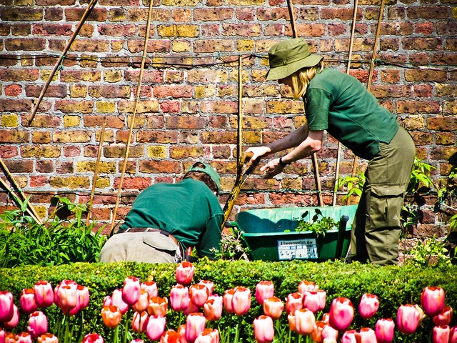 14 TIPS AND TRICKS FROM A MASTER GARDENER