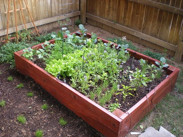 PLANNING IS THE KEY TO A GREAT ORGANIC GARDEN