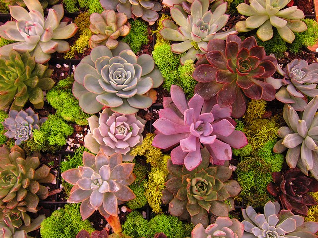 HOW TO GROW SUCCULENTS ANYWHERE