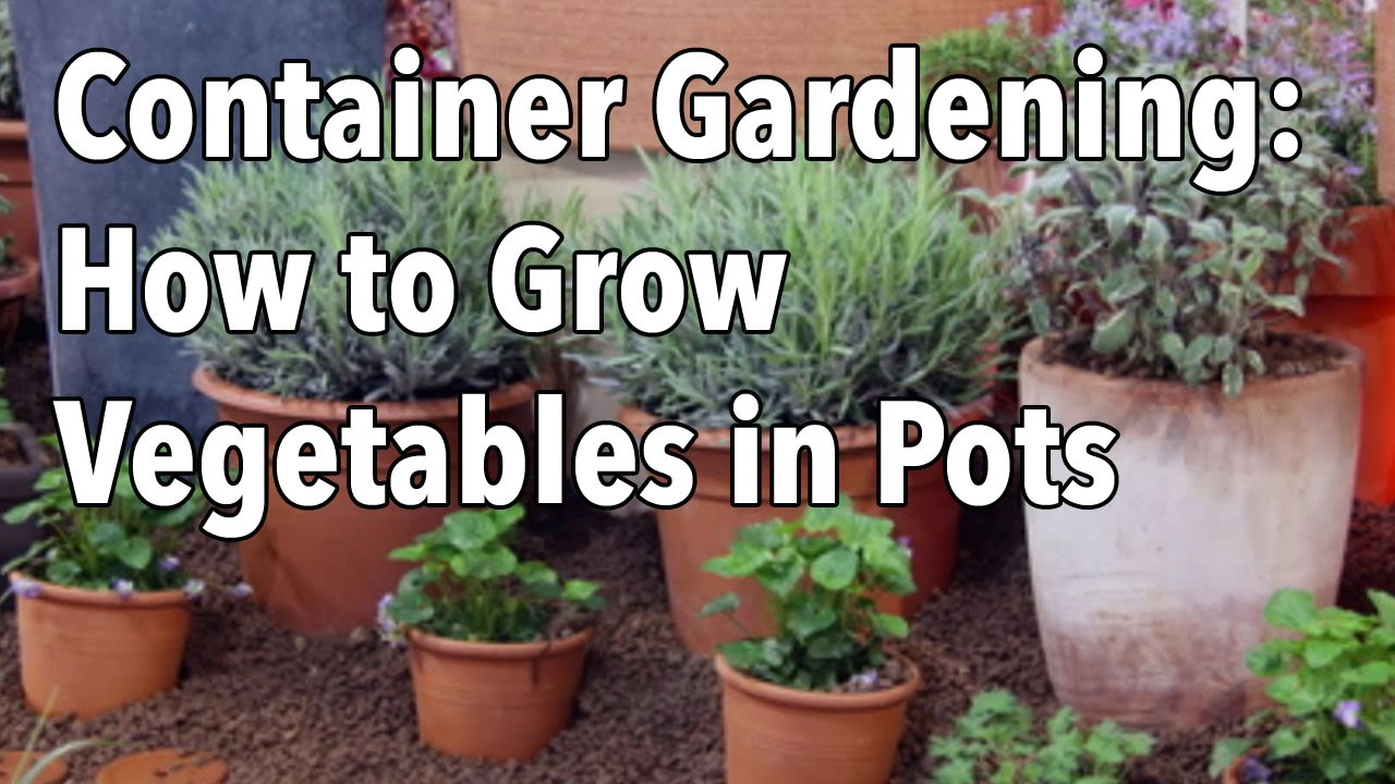 [VIDEO] HOW TO GROW VEGETABLES IN POTS