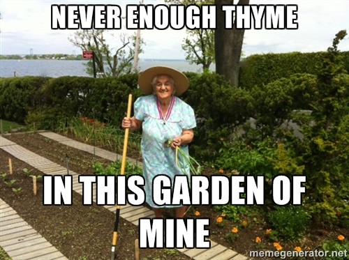 NEVER ENOUGH THYME…