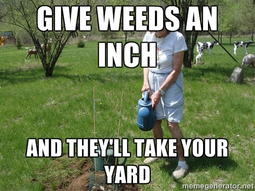 GIVE WEEDS AN INCH…