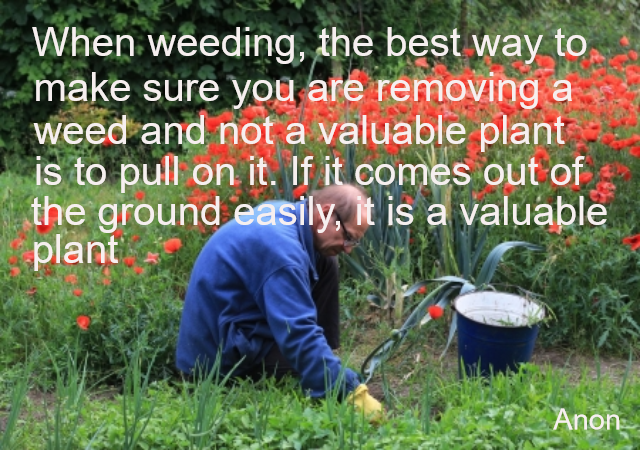 WHEN WEEDING THE BEST WAY TO MAKE SURE…