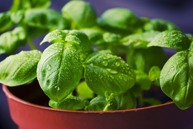 How to Enjoy Fresh Herbs All Year Round