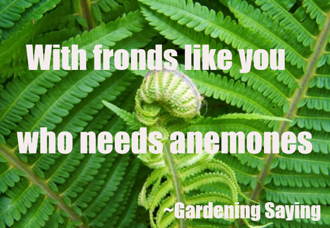 WITH FRONDS LIKE YOU..