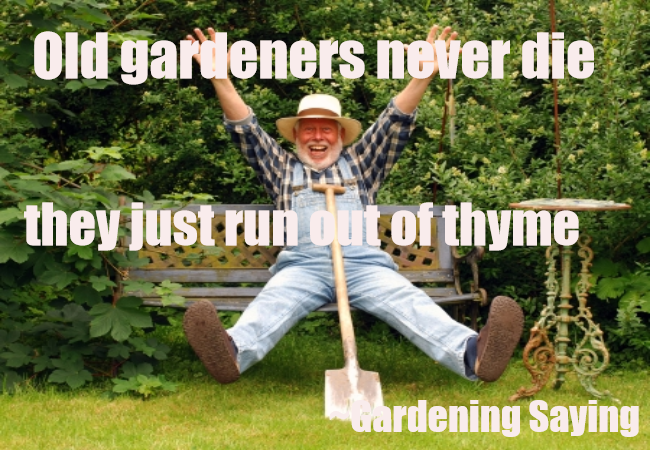 OLD GARDENERS NEVER DIE..