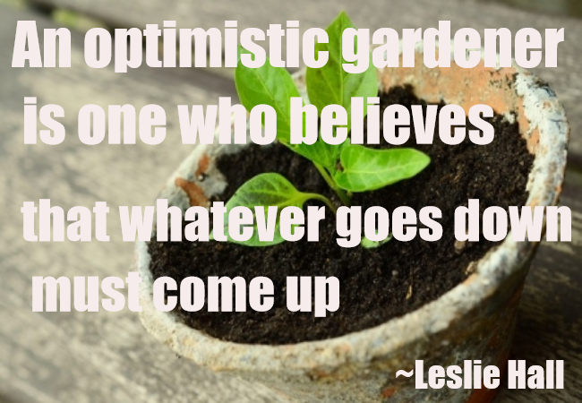 AN OPTIMISTIC GARDENER..