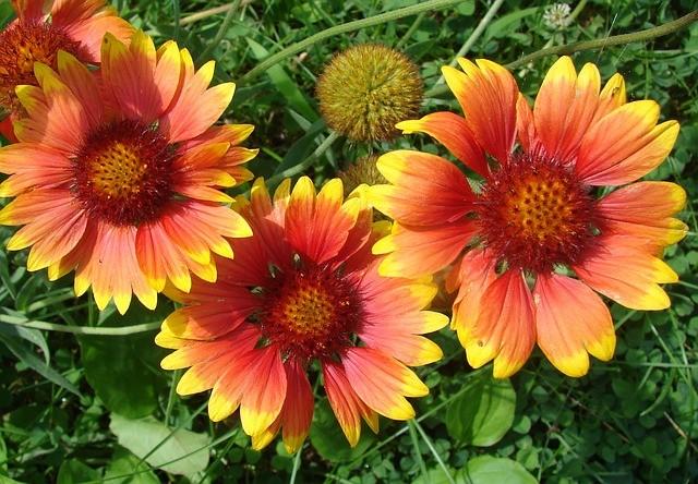 Top 10 Perennial Flowers for a Sunny Garden