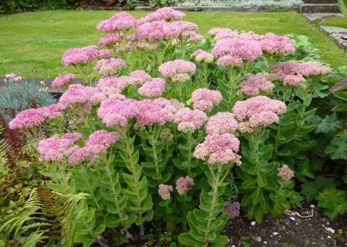 TOP 20 FLOWERS TO KEEP YOUR GARDEN BLOOMING INTO FALL