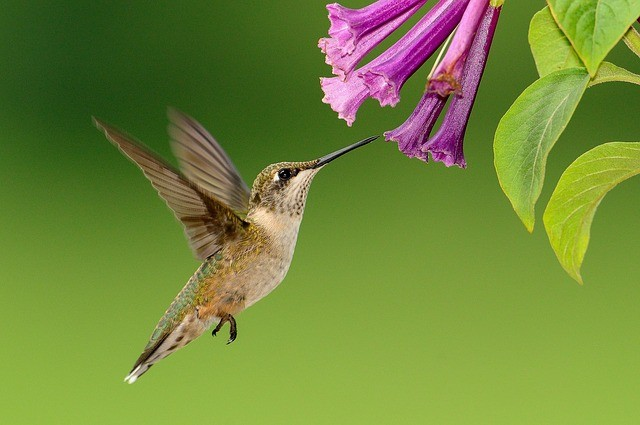 Plant a Tree to Attract Hummingbirds to Your Garden