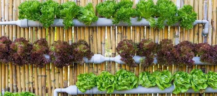 Top 15 Fruit And Vegetables For A Vertical Garden