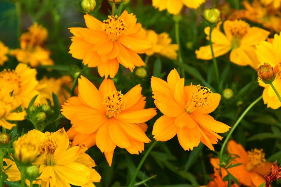 Top 10 Summer Sun-Loving Perennials