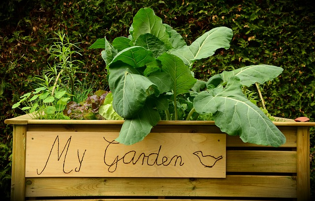 Raised Beds are the Best Idea Since Sliced Bread
