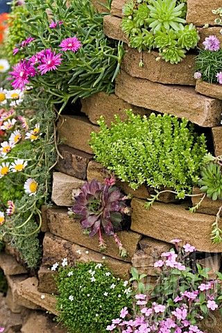 Top 10 Rock Plants For Stone Walls