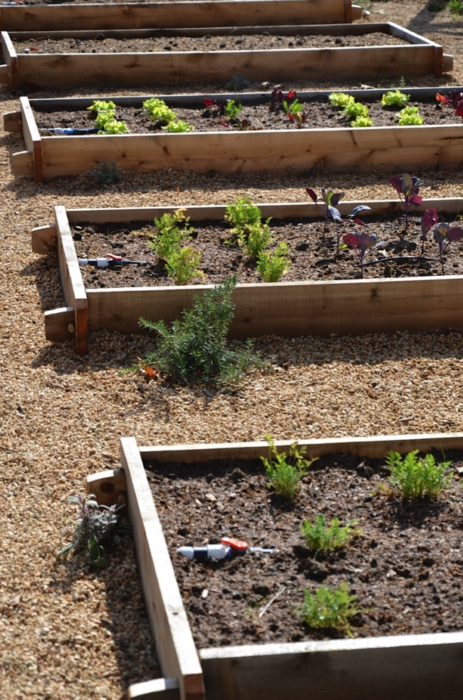12 Raised Bed Designs To Make Your Life Easier ...