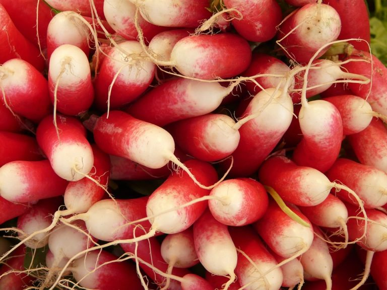 7 Cool Weather Vegetables You Can Plant Now