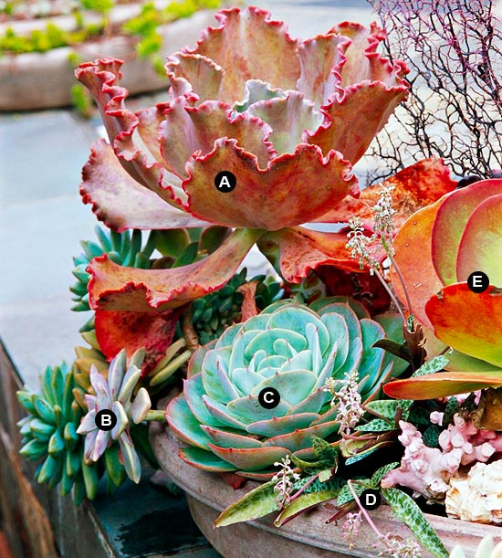 Top 10 Ideas for a Succulent Container Garden