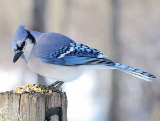 Top 3 Tips to Attract Birds to Your Garden