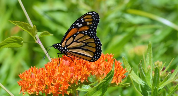 Top 10 Pollinator-Friendly Plants to Attract Bees and Butterflies