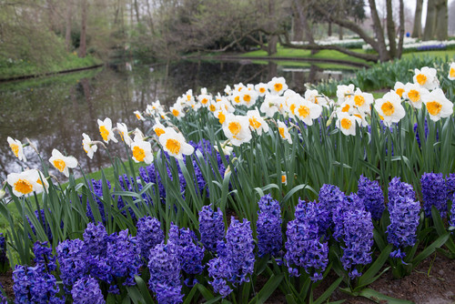 How to Care for Bulbs After the Flowers Have Faded