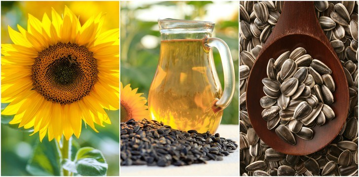 How To Grow The Best Sunflowers + 7 Wonderful Uses For The Entire Plant