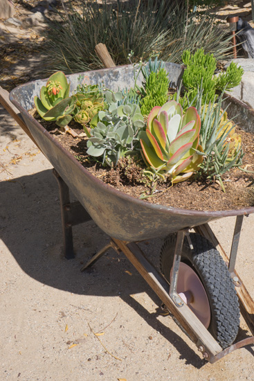 wheelbarrow planter 07