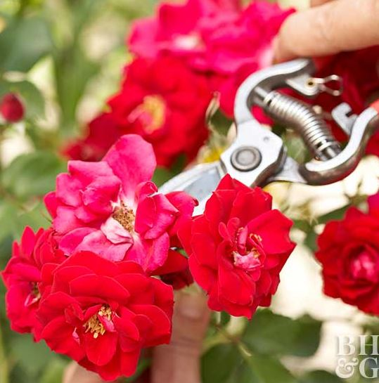 Top 25 Tips for Gardeners New and Old