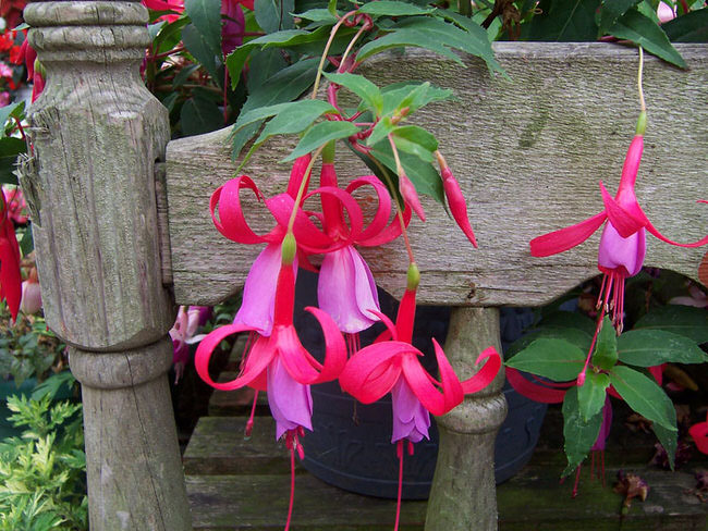 Top 7 Perennial Flowers for the Shade Garden