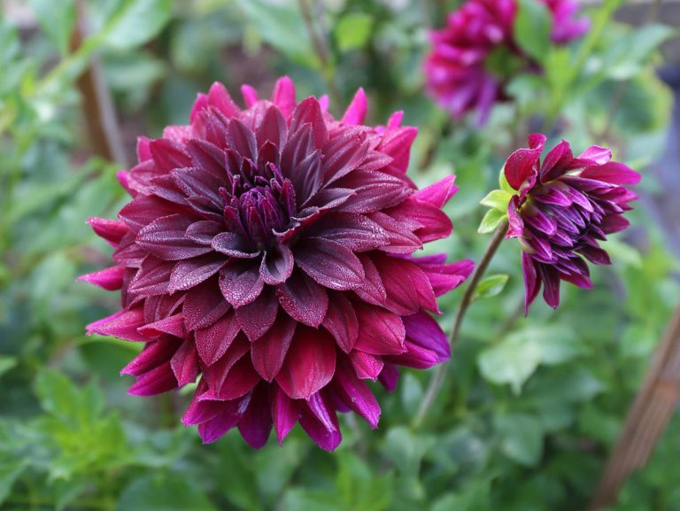 How to Use Burgundy Shades in the Garden