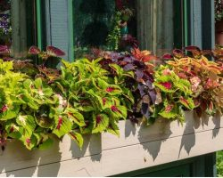 Top 10 Flowers for Window Boxes in Shade
