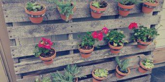 How to create a Vertical Garden