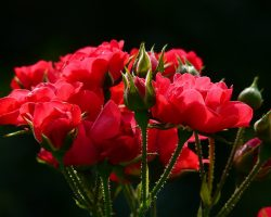 Why a Gift Of Flowers May Have Unintended Consequences
