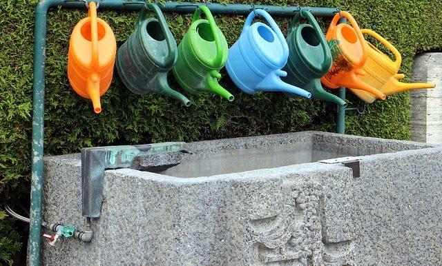 Top Tips on Watering Your Summer Garden